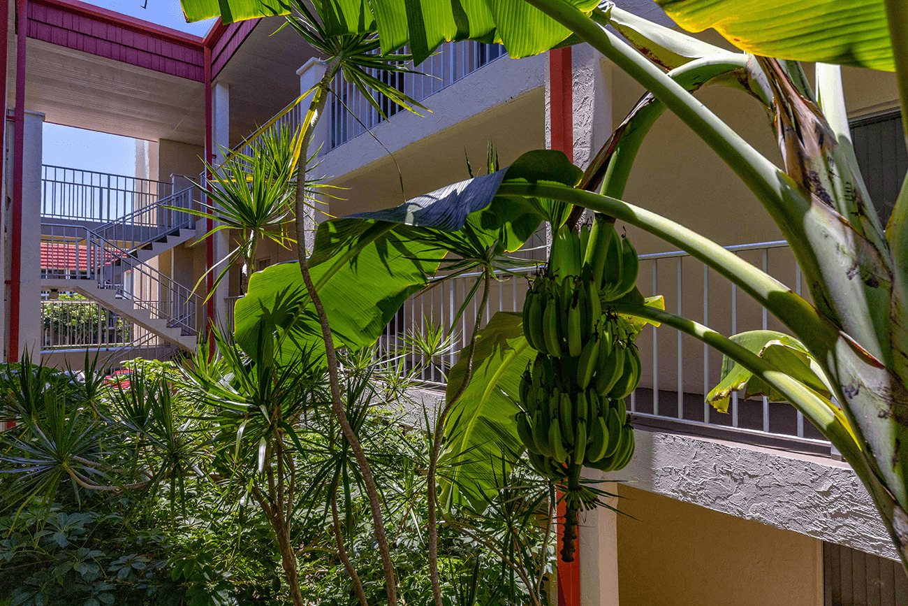 Plantains at your door!