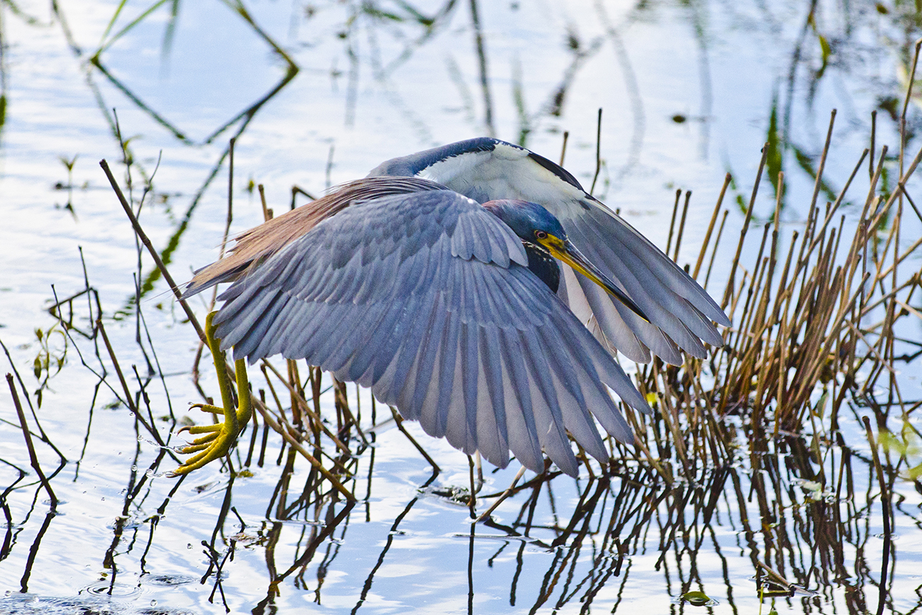 Explore the nature and wildlife of Myakka State Park (only 13 miles east!)